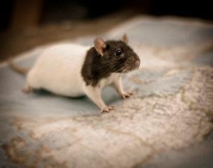 ratstory99