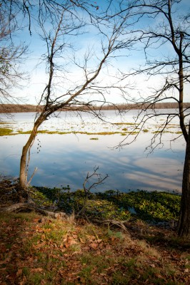 View of Bayou at Arkansas Post National Park